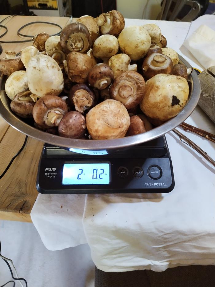 2 lbs mushrooms