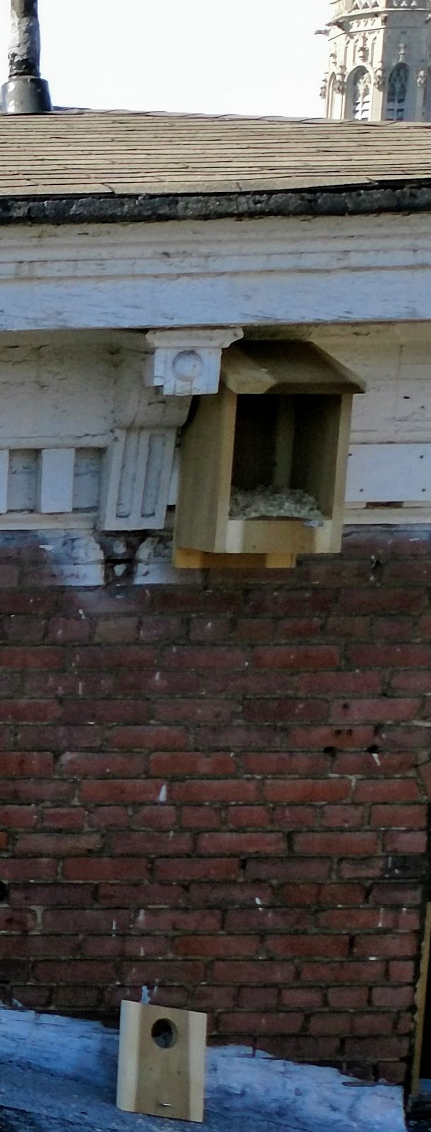 American kestrel/yellow-shafted flicker/Eastern screech owl box installed under 3rd floor eave.