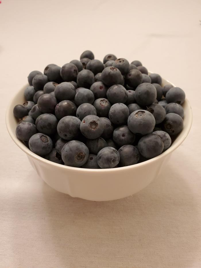 A bowl of freshly picked homegrown blueberries!