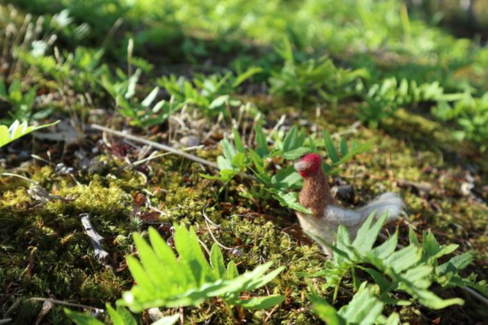 Henny Penny Chicken and Tiny Ferns
