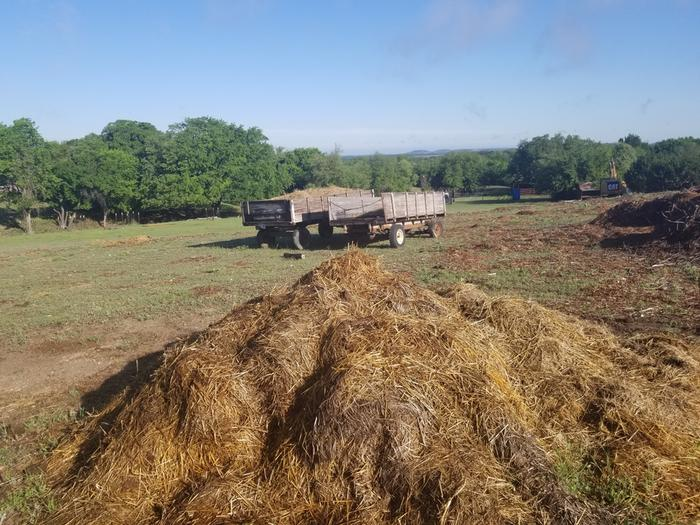 spent hay for post earth works seeding