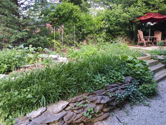 View of the shallow backyard terrace with fledgling fruit guild, herb snail, and no-till bed with cinderblocks