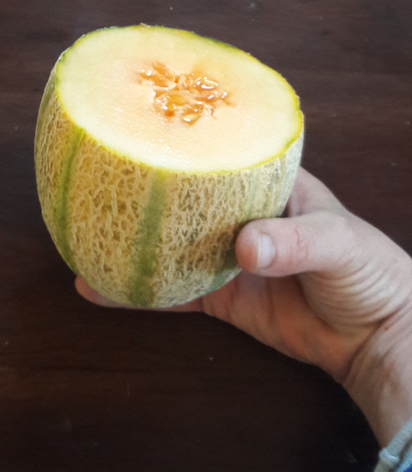 [Thumbnail for 20190918-Lofthouse-melon-small-but-good.jpg]