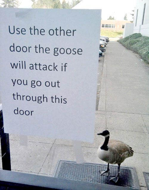 [Thumbnail for Goose-and-door.jpg]