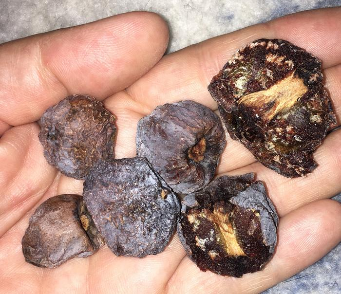 dried wild persimmons