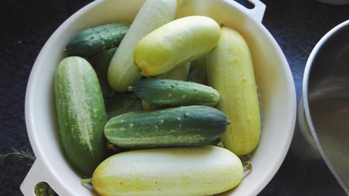 wild mix of cucumbers
