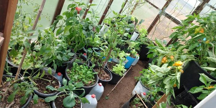 A few pepper stragglers and many small cold-season plants