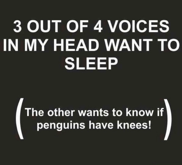 [Thumbnail for 3-of-4-voices-want-to-sleep-and-1-wants-to-know-if-penguins-have-knees.png]