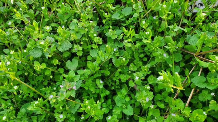 Beautiful and wild groundcover
