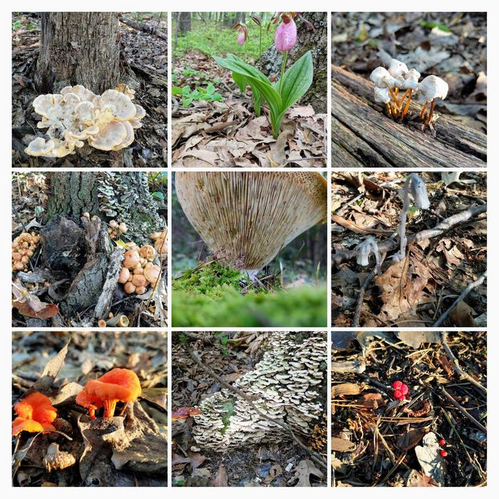 [Thumbnail for 20180505_fungus-COLLAGE.jpg]