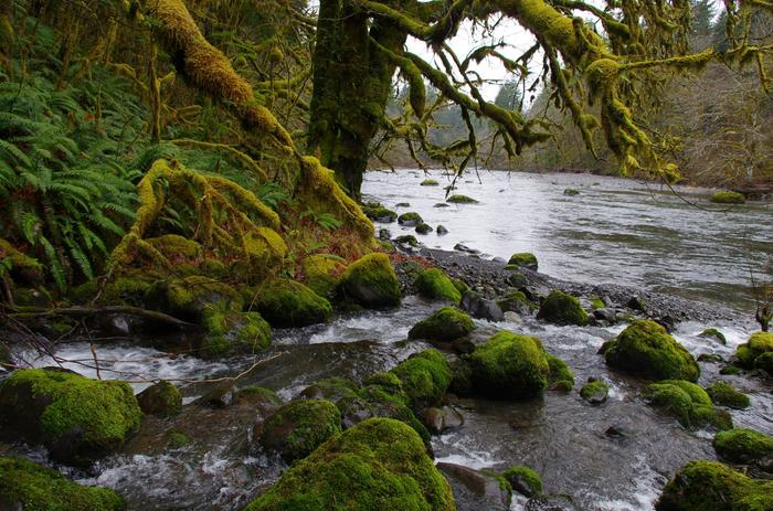 [Thumbnail for sol-duc-river-by-mark-wehnert.jpg]