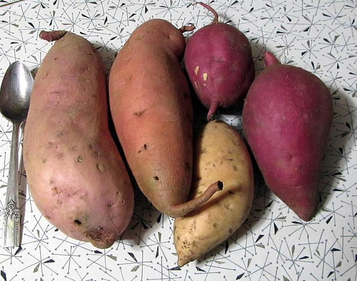 2020 Sweet Potatoes (seed grown but low seed production)