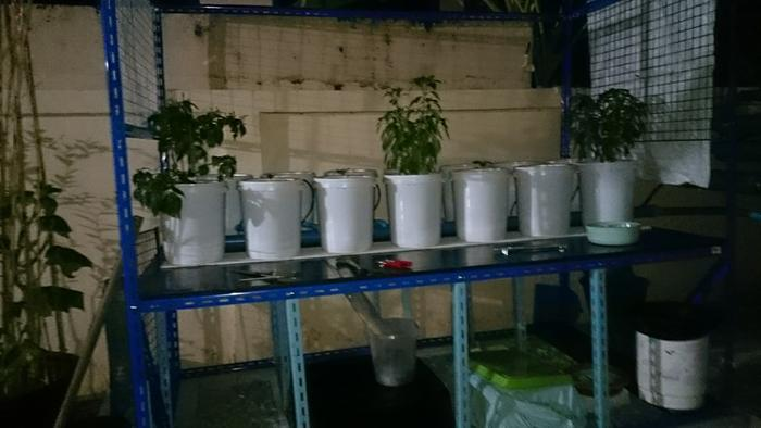 and for tall plants he built a dutch bucket system for me..