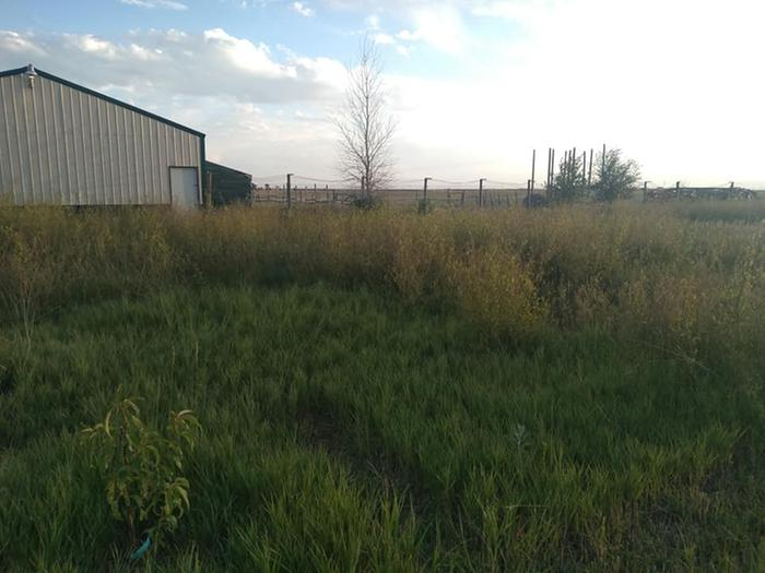 Irrigated orchard area with grass and sweet clover