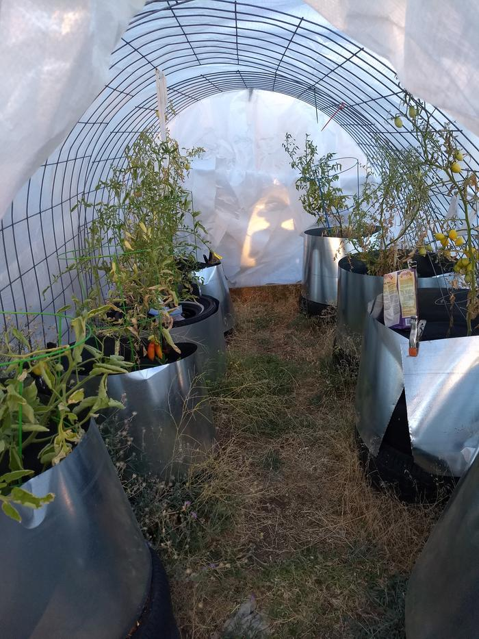 Inside the hoop house, mid-summer(!)