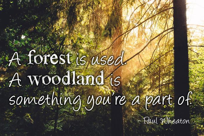 [Thumbnail for forest-woodland.jpg]