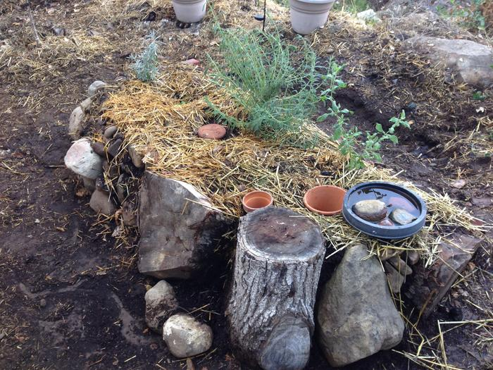 Hugelkultur with an unglazed clay pot burried for irrigation.