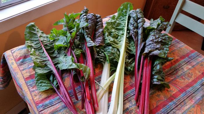 chard on my friend's table