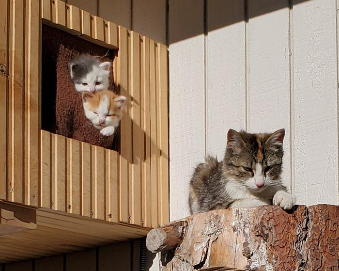 cat house kittens