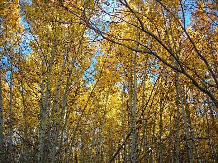 Fall in the Aspen smells so good!
