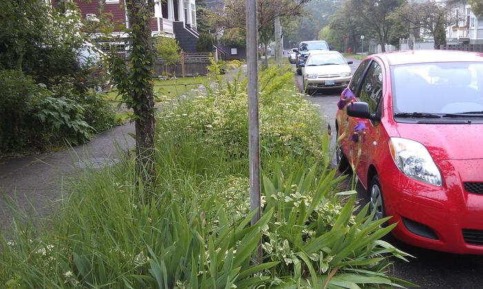 Boulevard and front yard planting are common