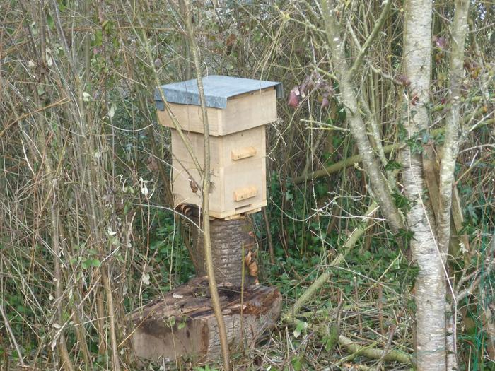 Bait hive among the brambles and wildish plum trees