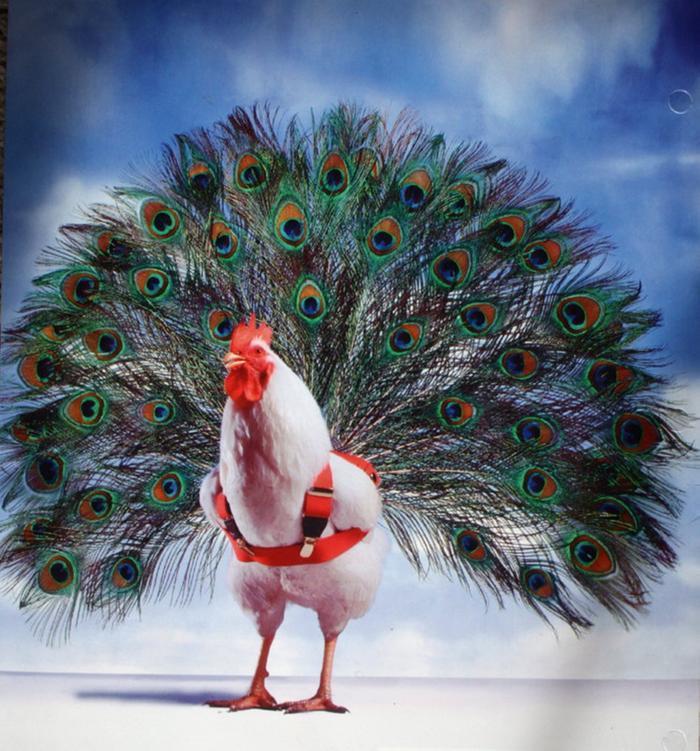 менее, демотиваторы птица счастья комплекс мире