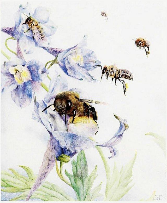 life-of-the-bee.jpg