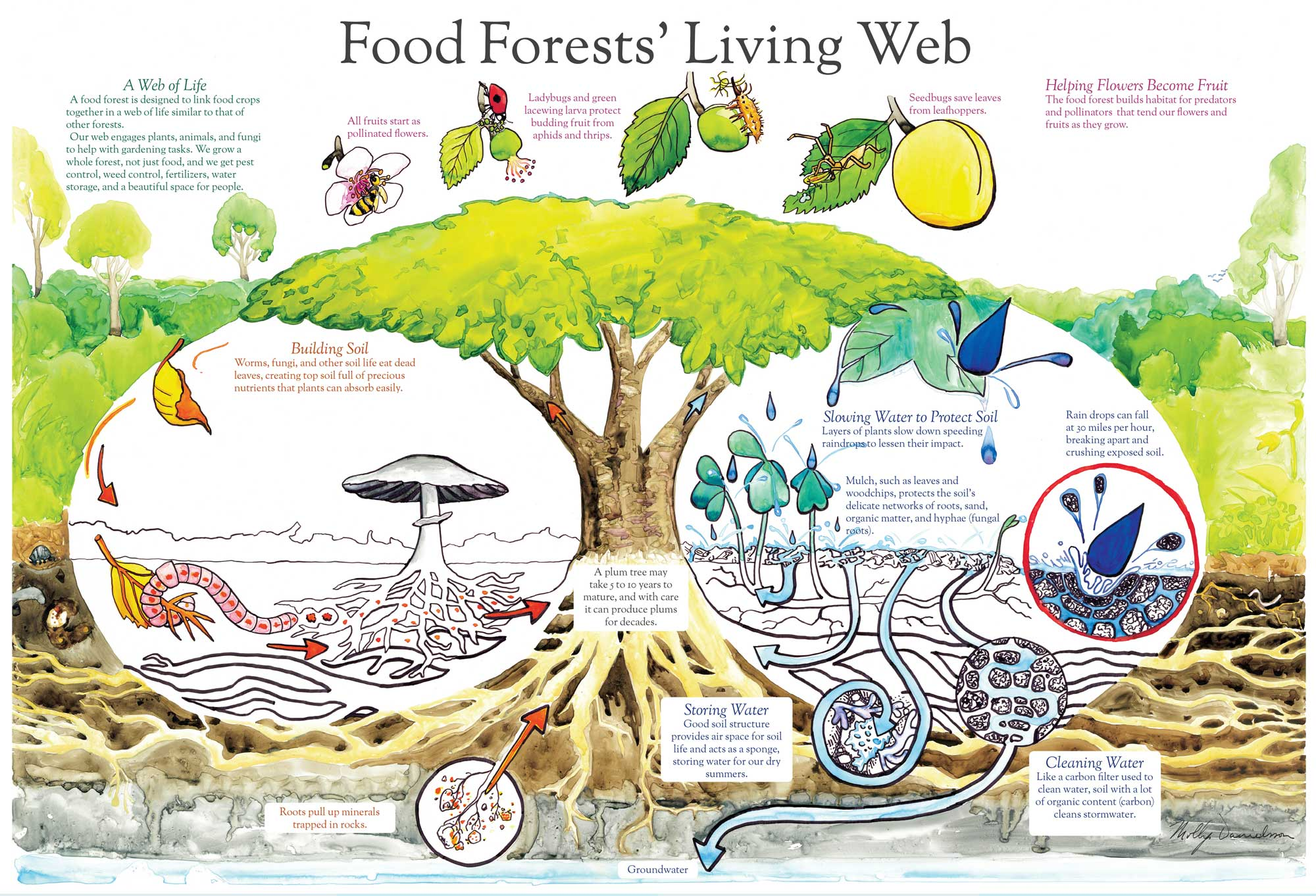 Food Forest Living Web Infographic on Animal Habitat Art Projects