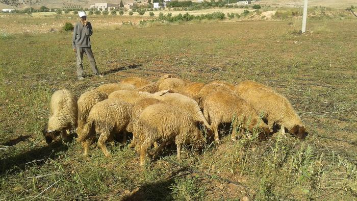 we added 20 male sheep, we hope to get some income