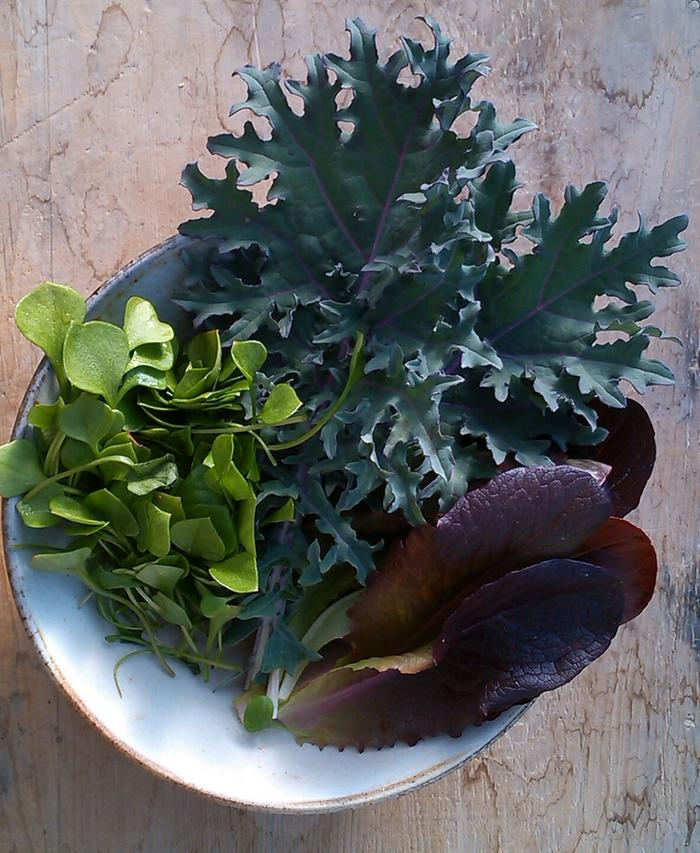 [Thumbnail for 20160206-Leafy-Salad-from-my-greenhouse-1.jpg]