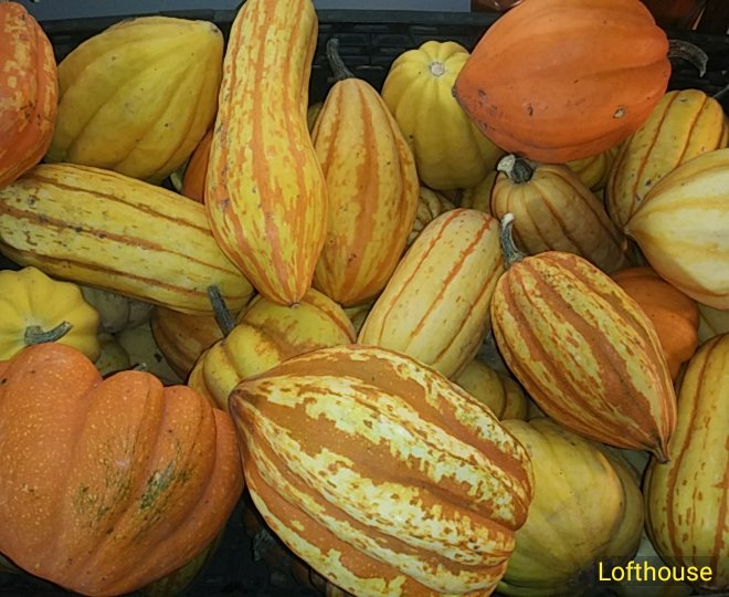 Lofthouse pepo winter squash