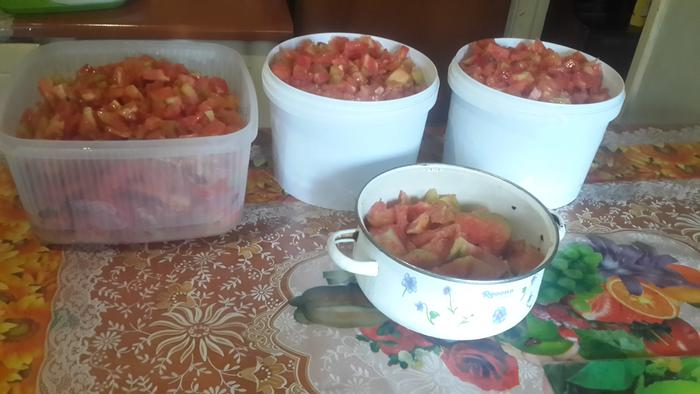 most of the tomatoes from the garden