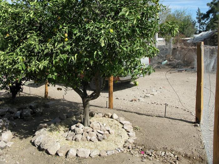 added stone mulch around base of tree, be careful to not damage tree