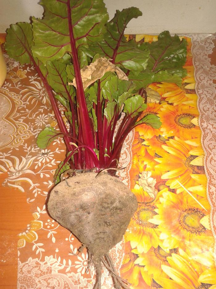 beetroot could be a new common vegetable