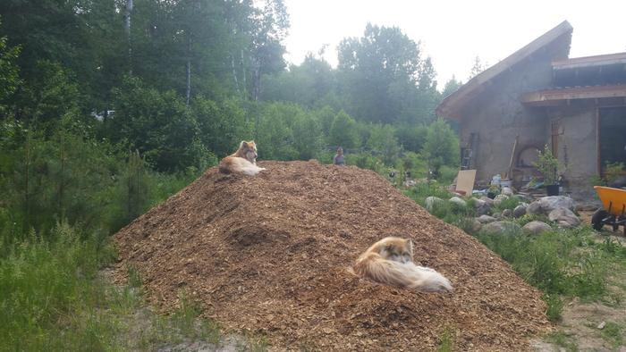 woodchips delivered, time for some mulch