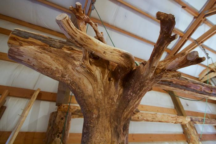 [Thumbnail for roundwood-timber-framing-root-wood.jpg]