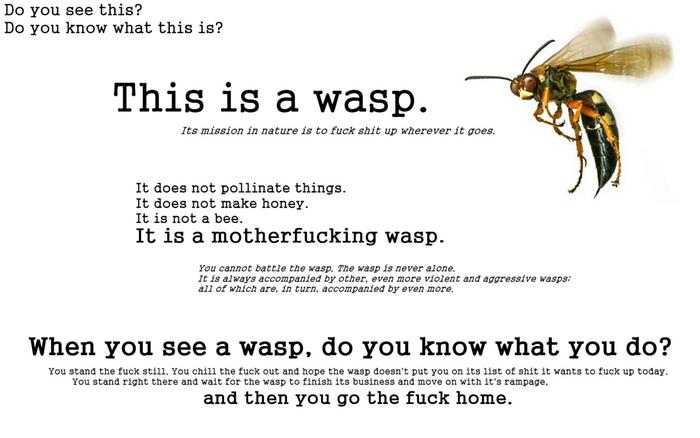 [Thumbnail for wasp.jpeg]