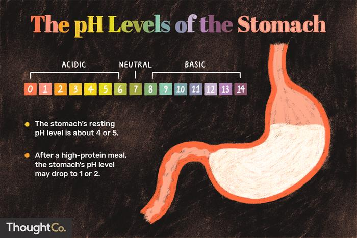 pH of the stomach