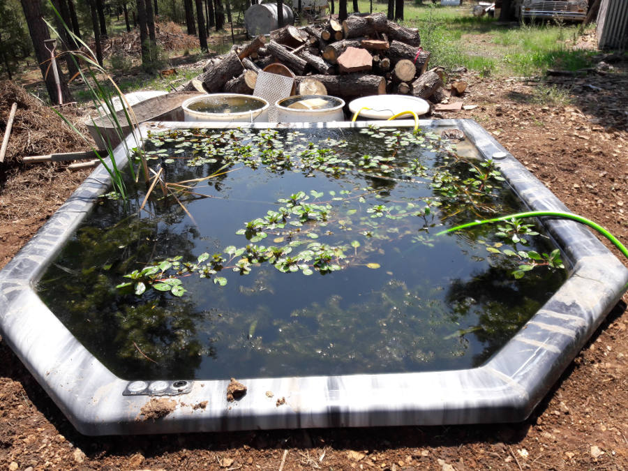 Garden hugelkultur koi pond fun projects forum at permies for Koi pond forum